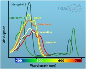 Absorption vs Photosynthetic Rate at different light wavelengths